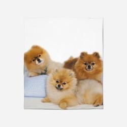 Pătură - Pomeranian Babies
